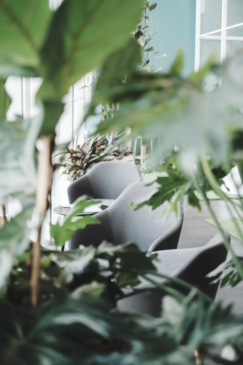 selective focus of three gray padded chairs between plants