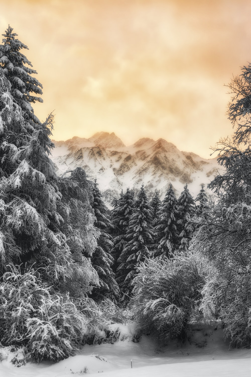 landscape photography of trees covered with snow