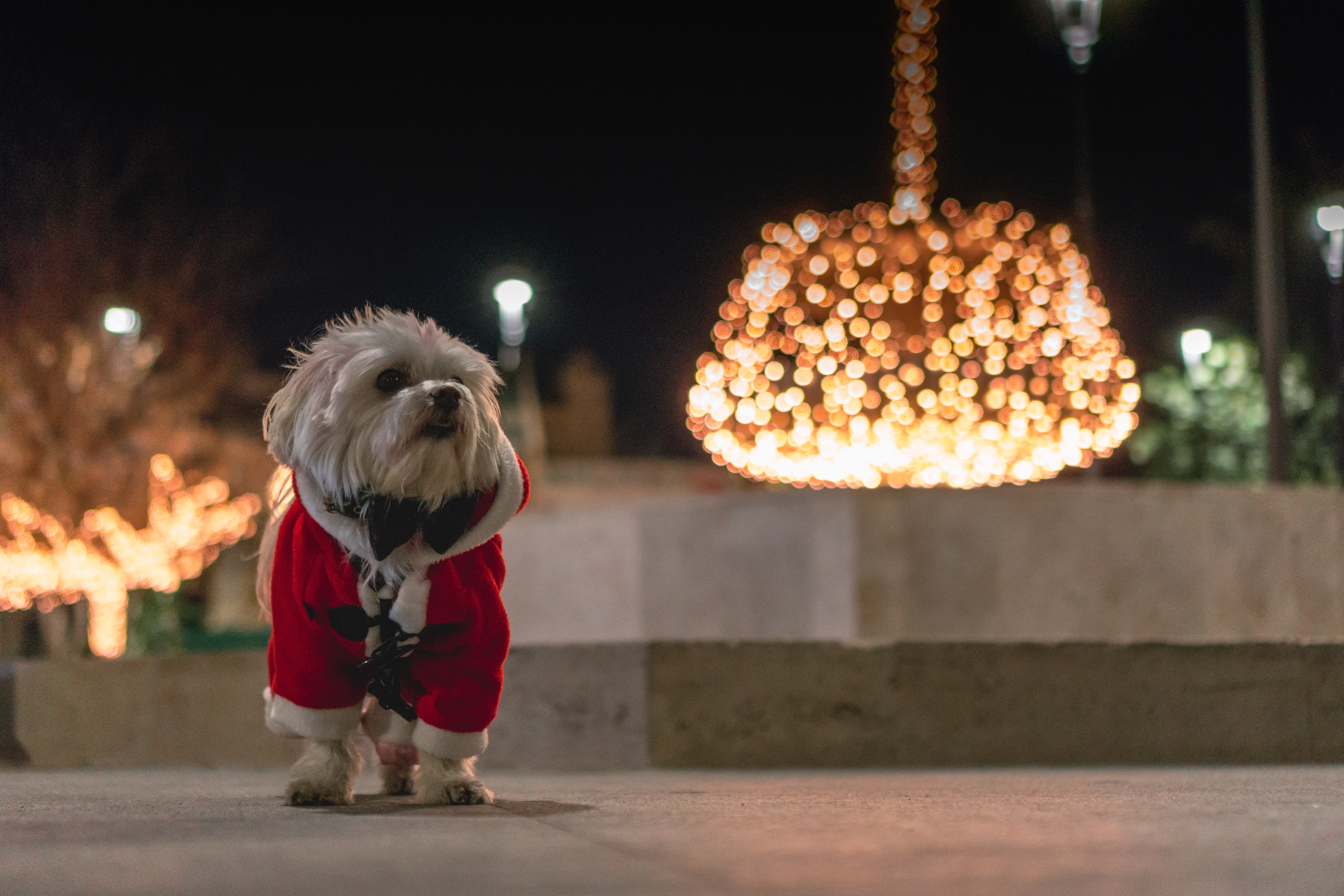 A dog wearing a Santa suit