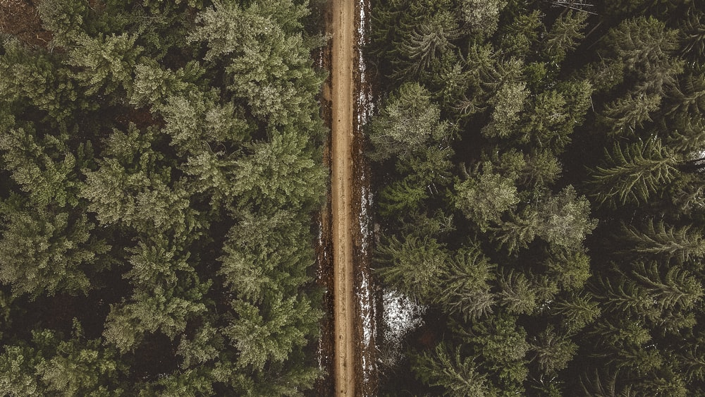 green pine trees in aerial photography