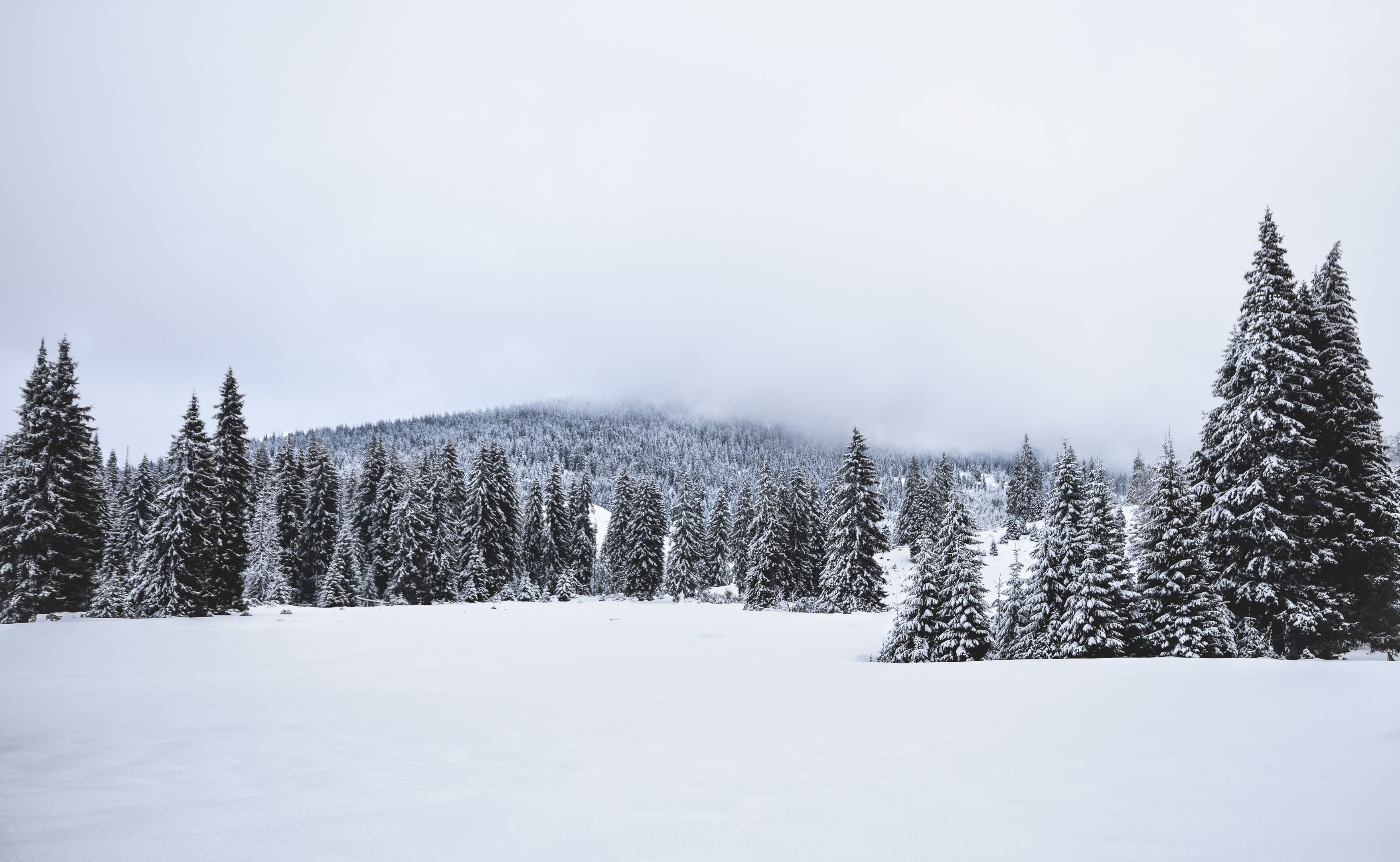 landscape photo of pine trees covered with snow