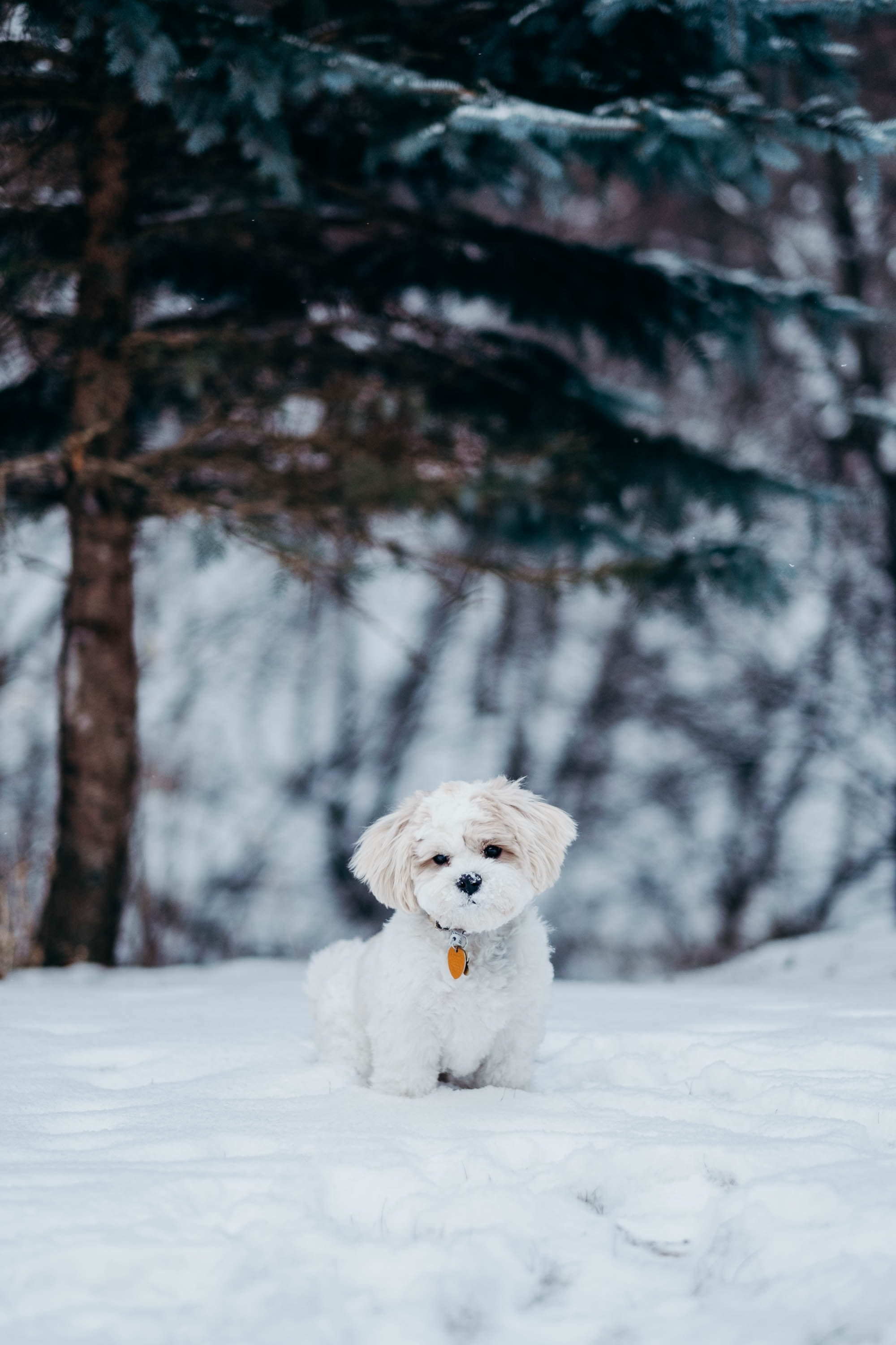 white dog standing on snow field beside tree
