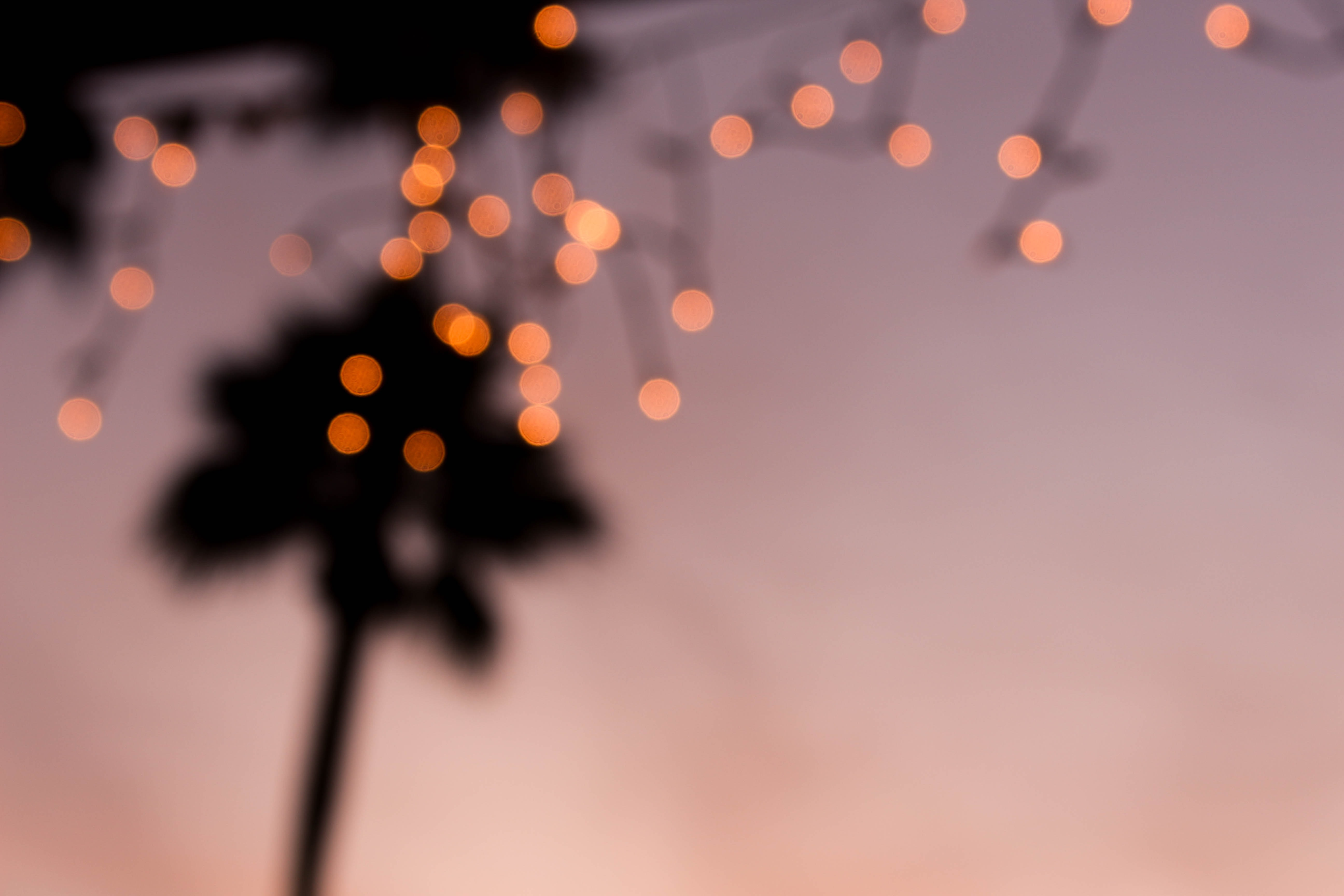 orange bokeh photography