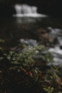 green leaf in shallow focus photography
