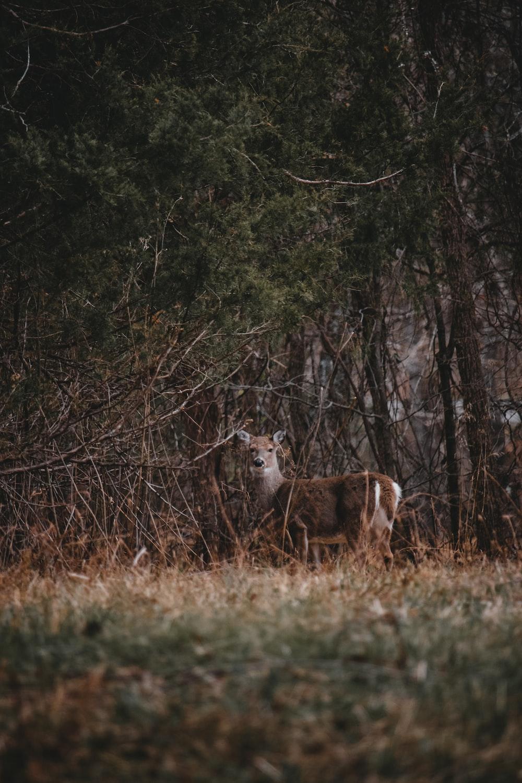 selective focus photography of deer