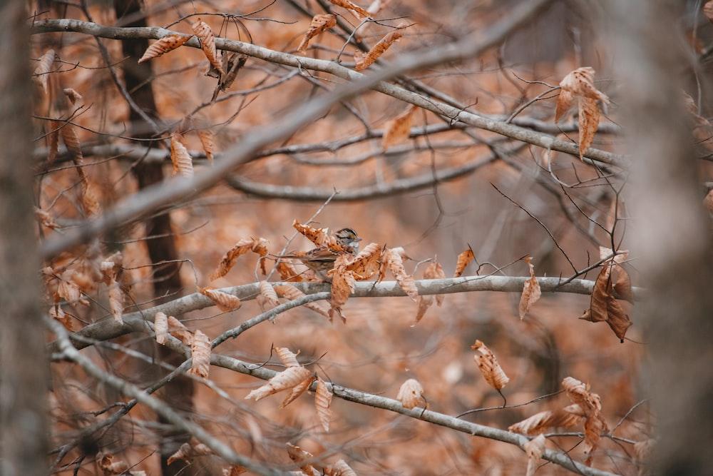 brown dried leafed tree