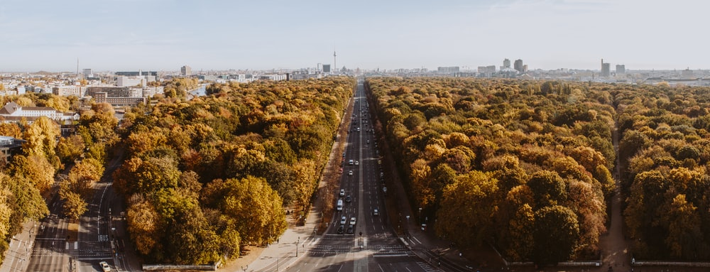 gray road surrounded by trees during daytime in aerial view photography