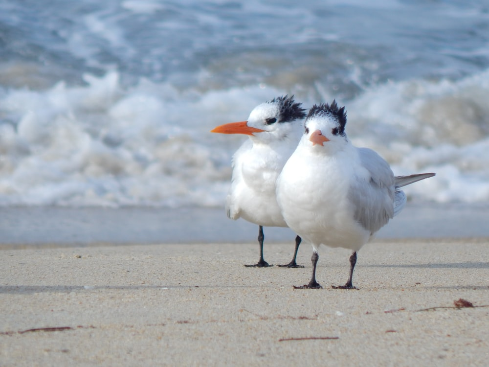 two seagulls on beach