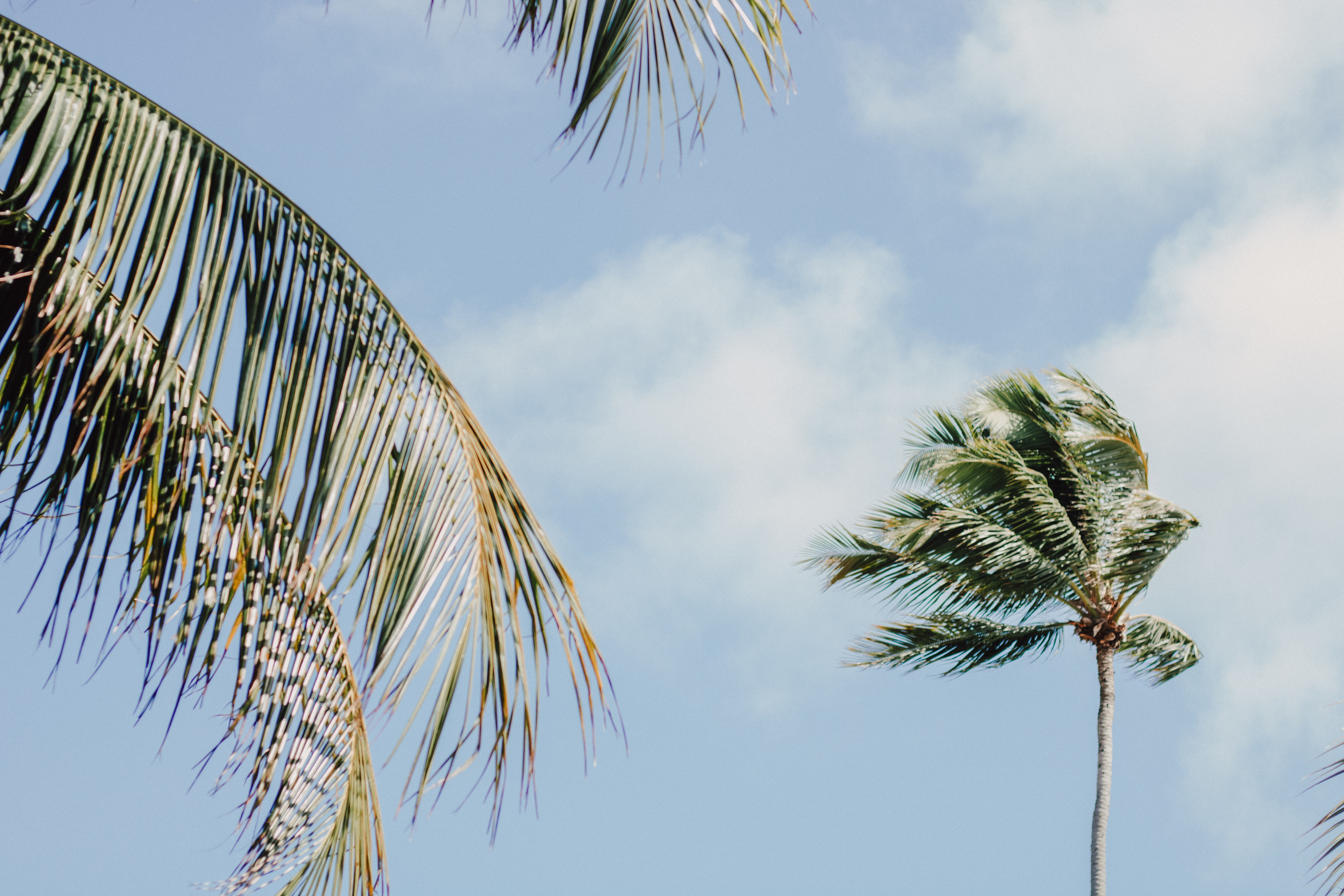 coconut trees during daytime