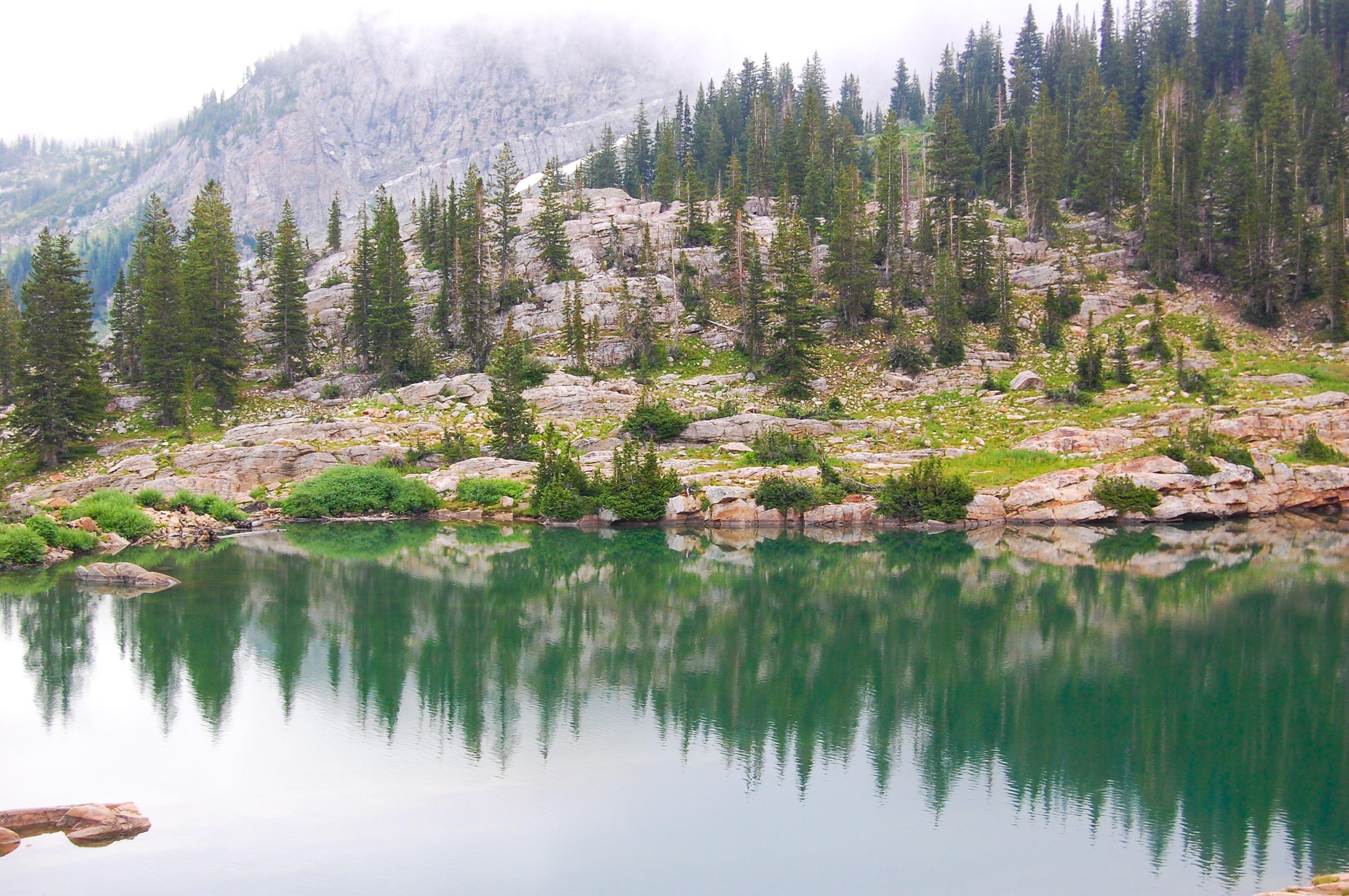 landscape photography of lake near trees