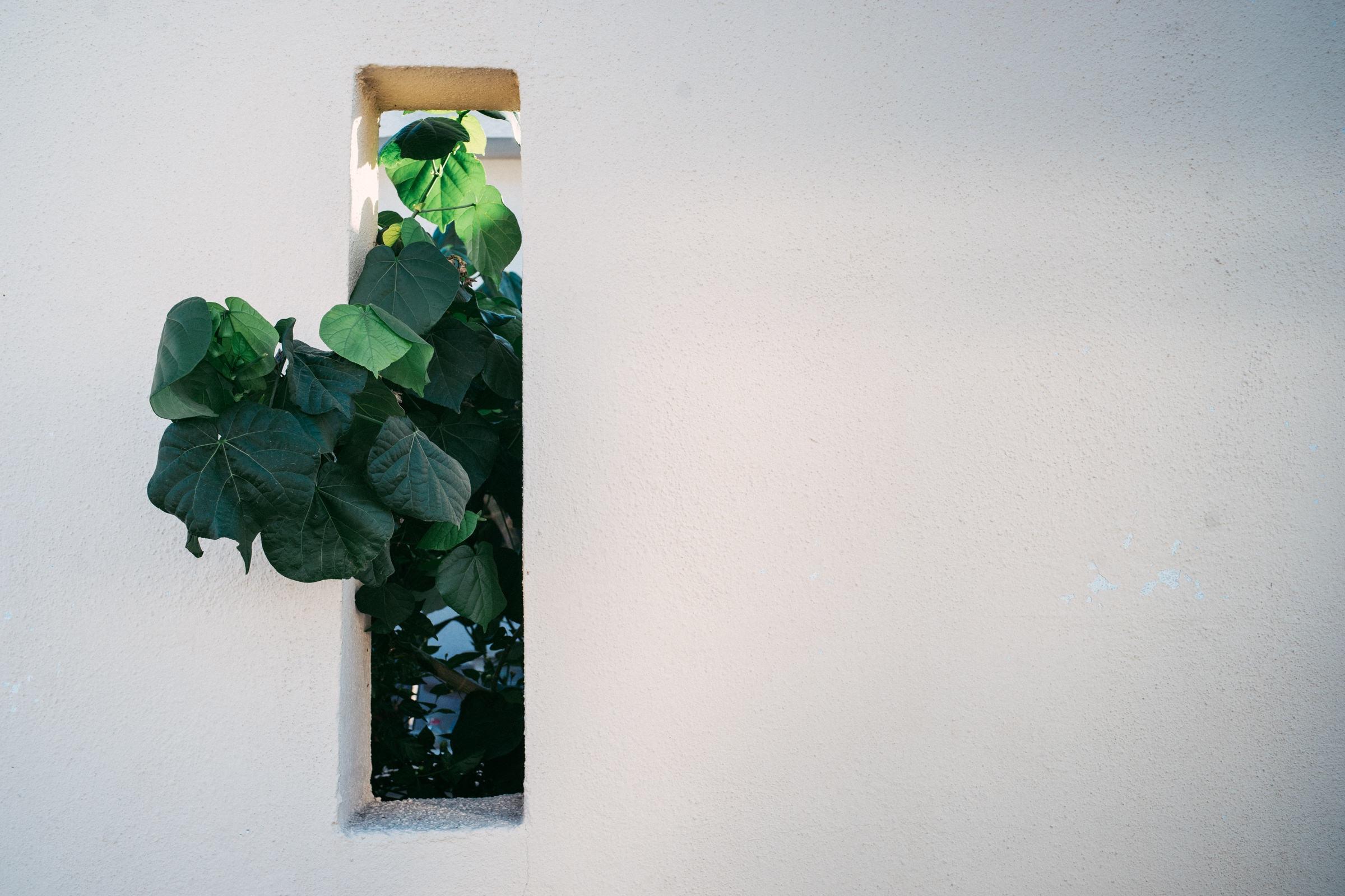 green leafed tree peeps on window panel