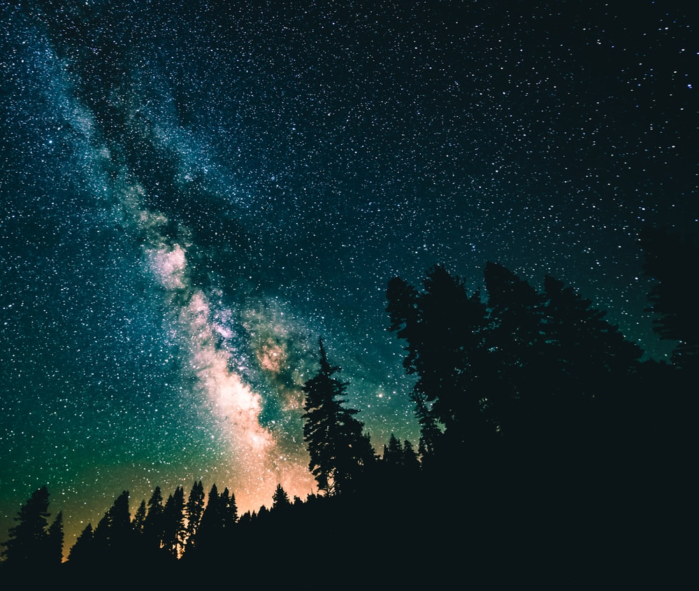 nebula above tall trees