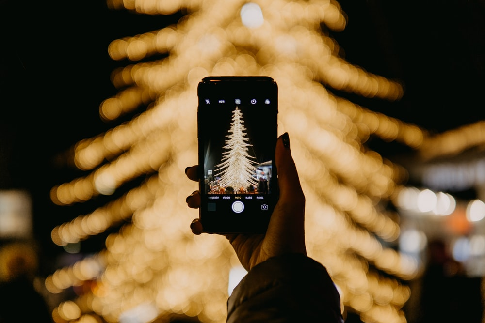 person taking photo of tree
