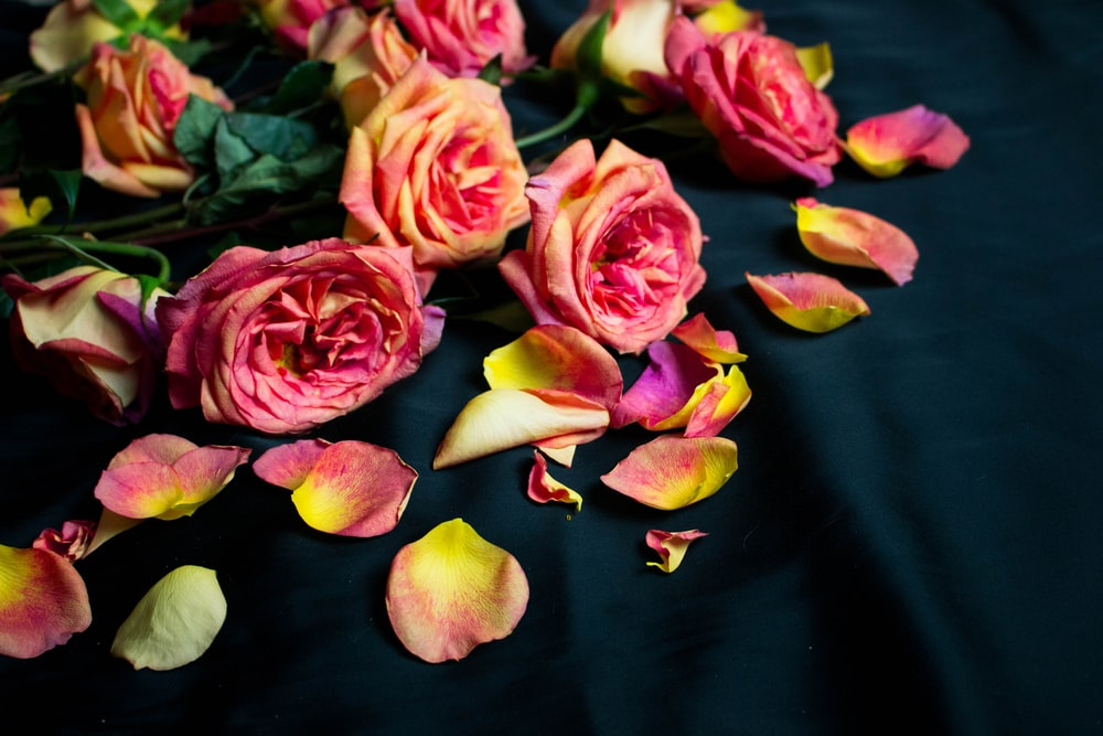 pink flowers on black cloth