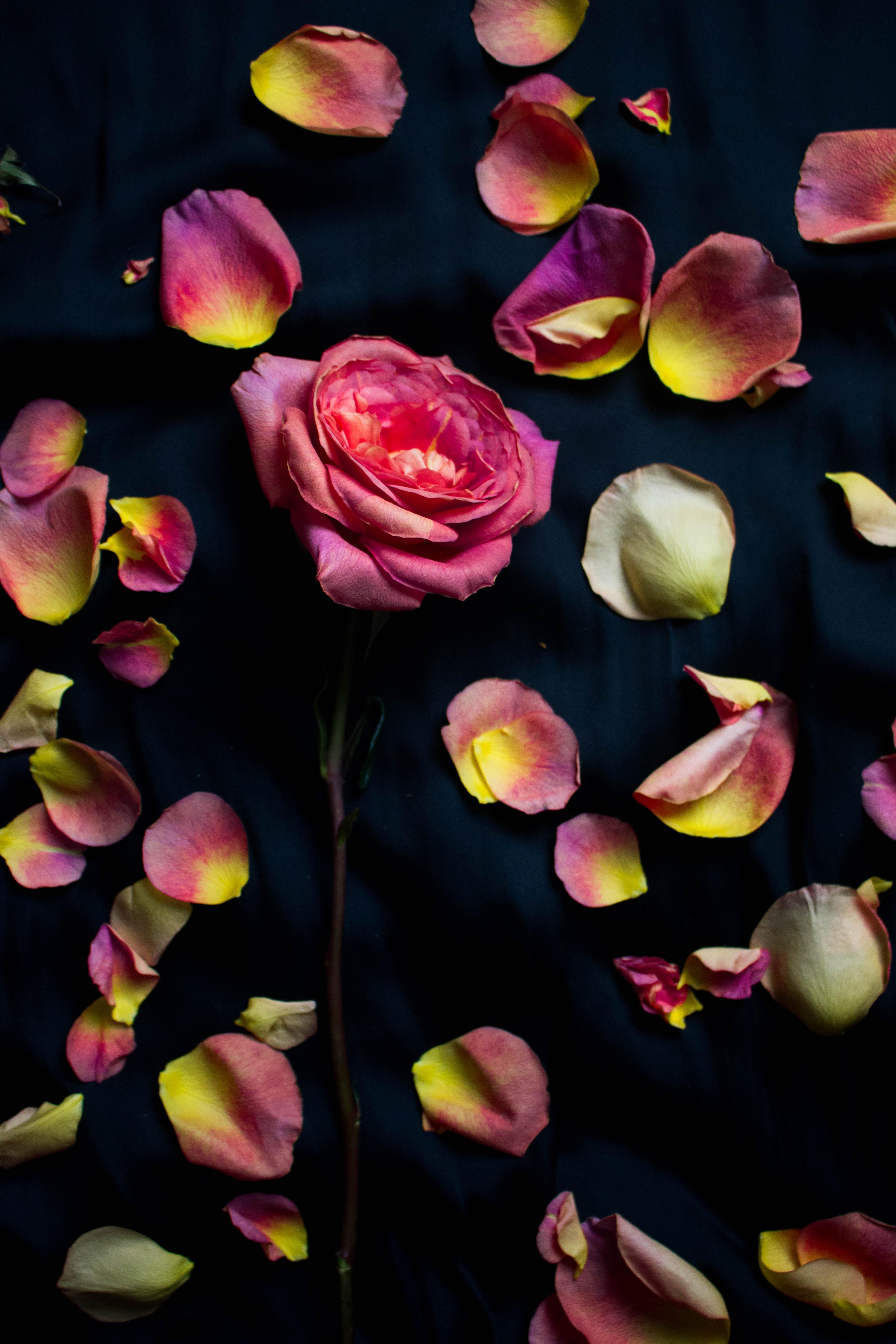 closeup photo of pink petals