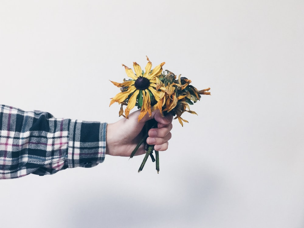 person holding withered bouquet of flowers