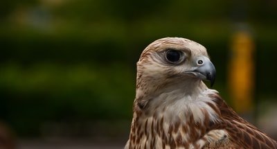 shallow focus photography of hawk during daytime
