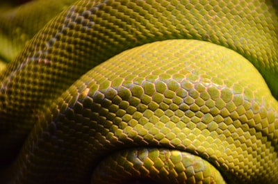 green snake scales