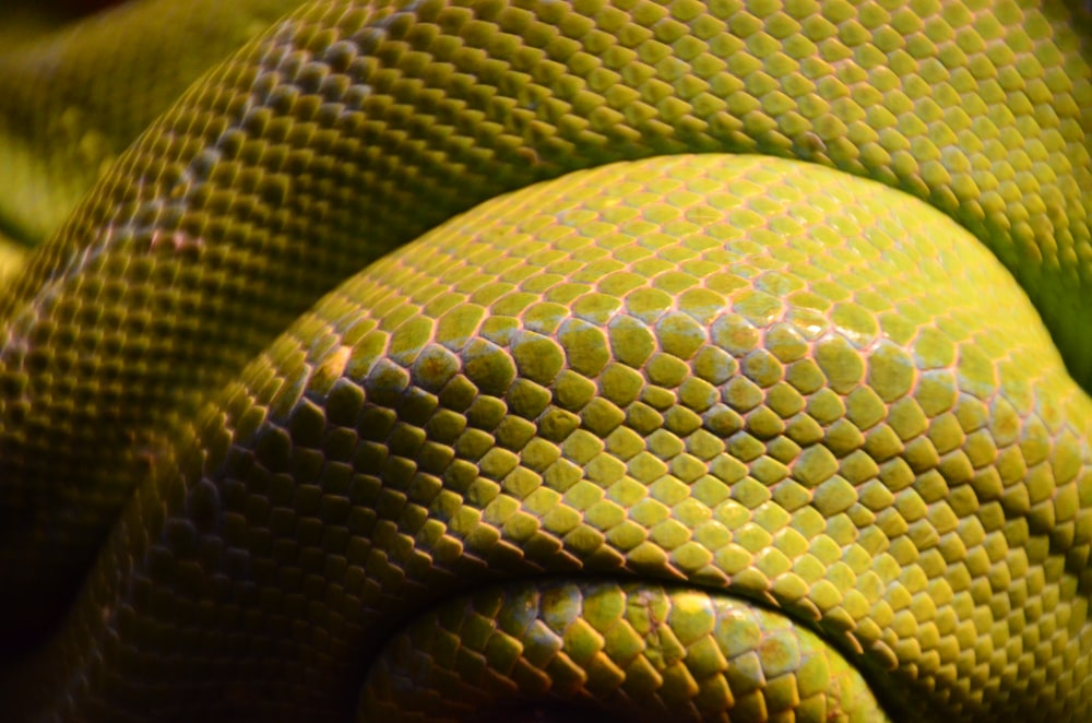 yellow and gray snake scales