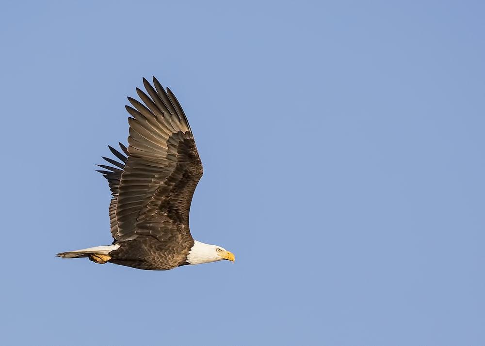 500 Eagle Pictures Download Free Images On Unsplash