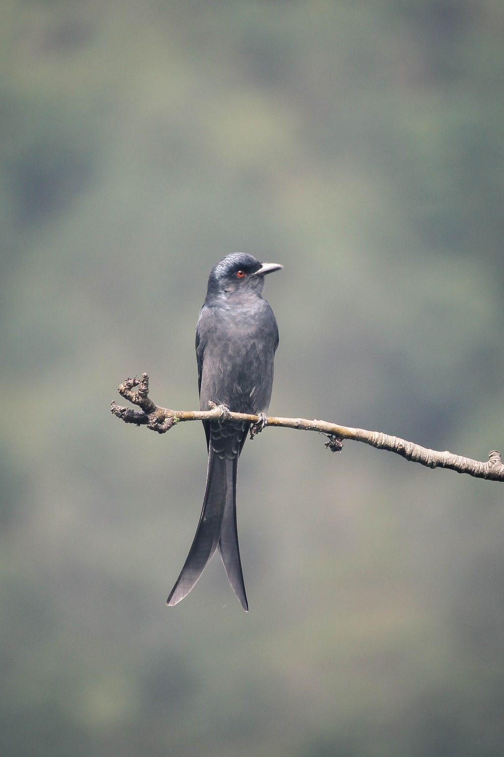 gray bird on top of tree branch during daytime