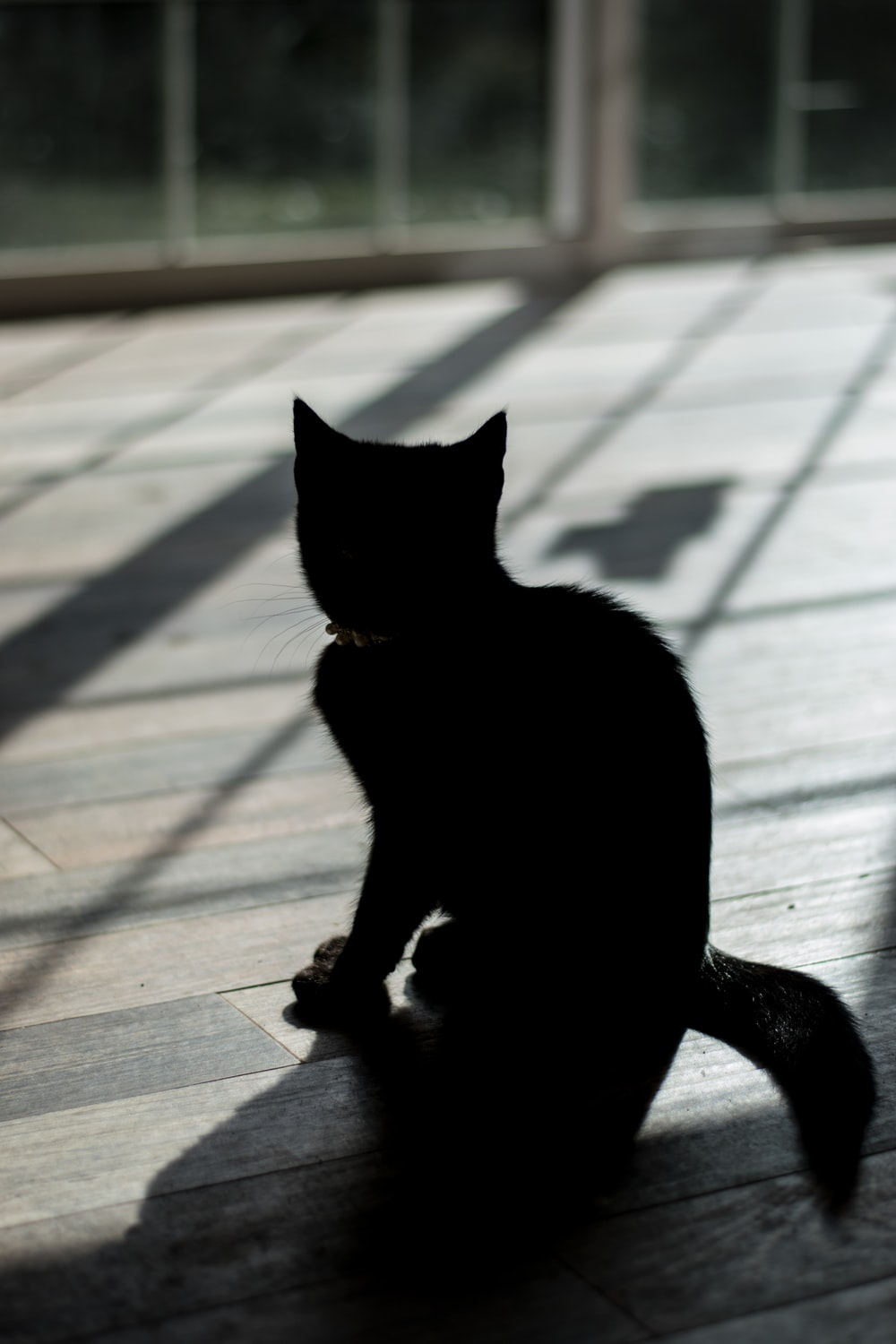 photo of black kitten near on balcony