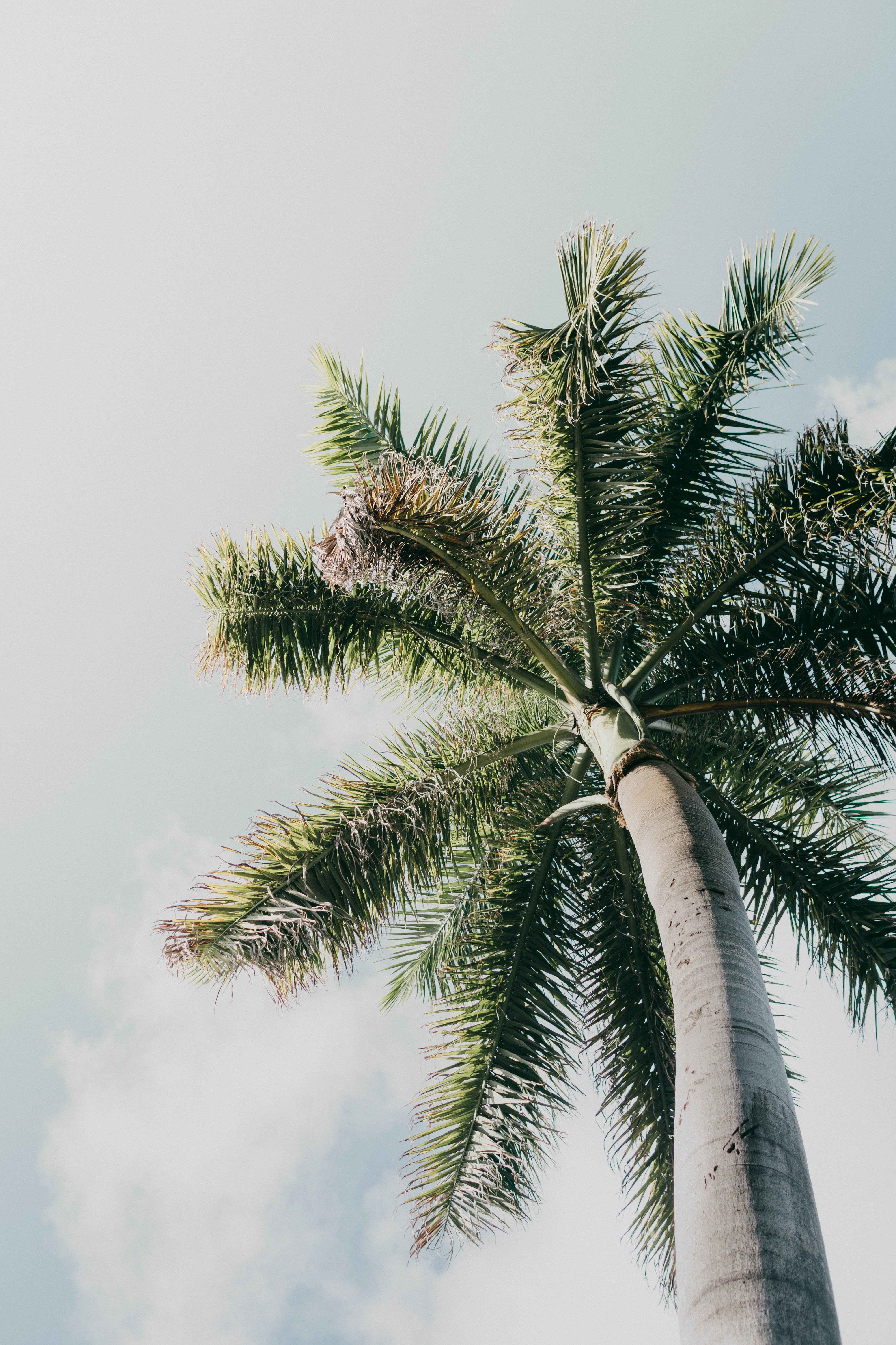 low-angle photography of a palm tree