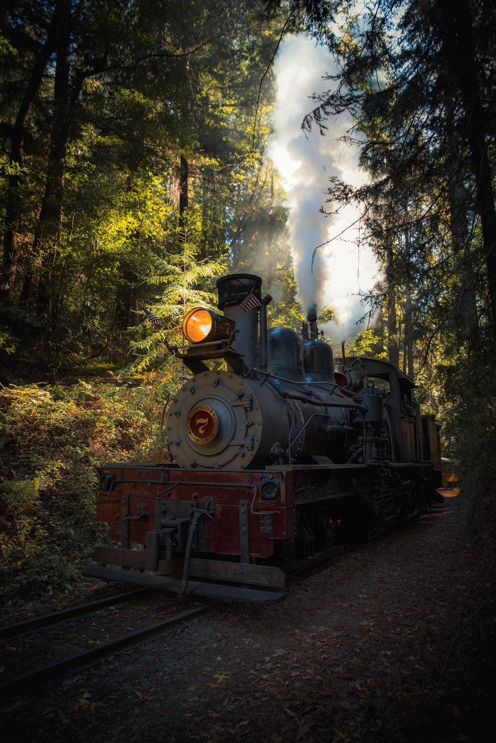 Steam locomotive surrounded by forest trees during daytime