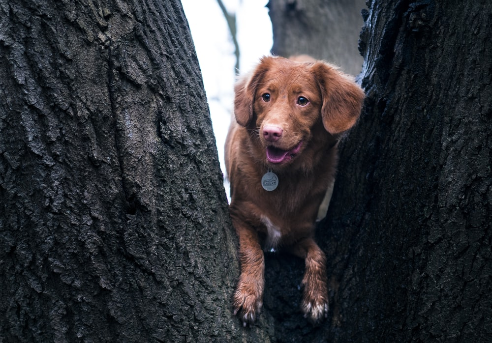 dog on tree