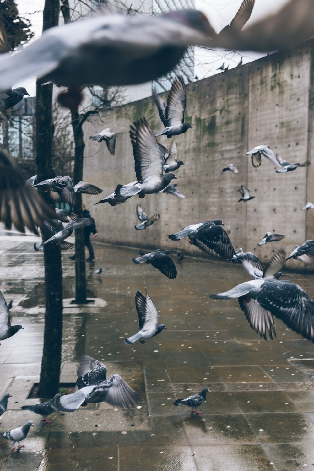 photo of flying bird near pavement and wall