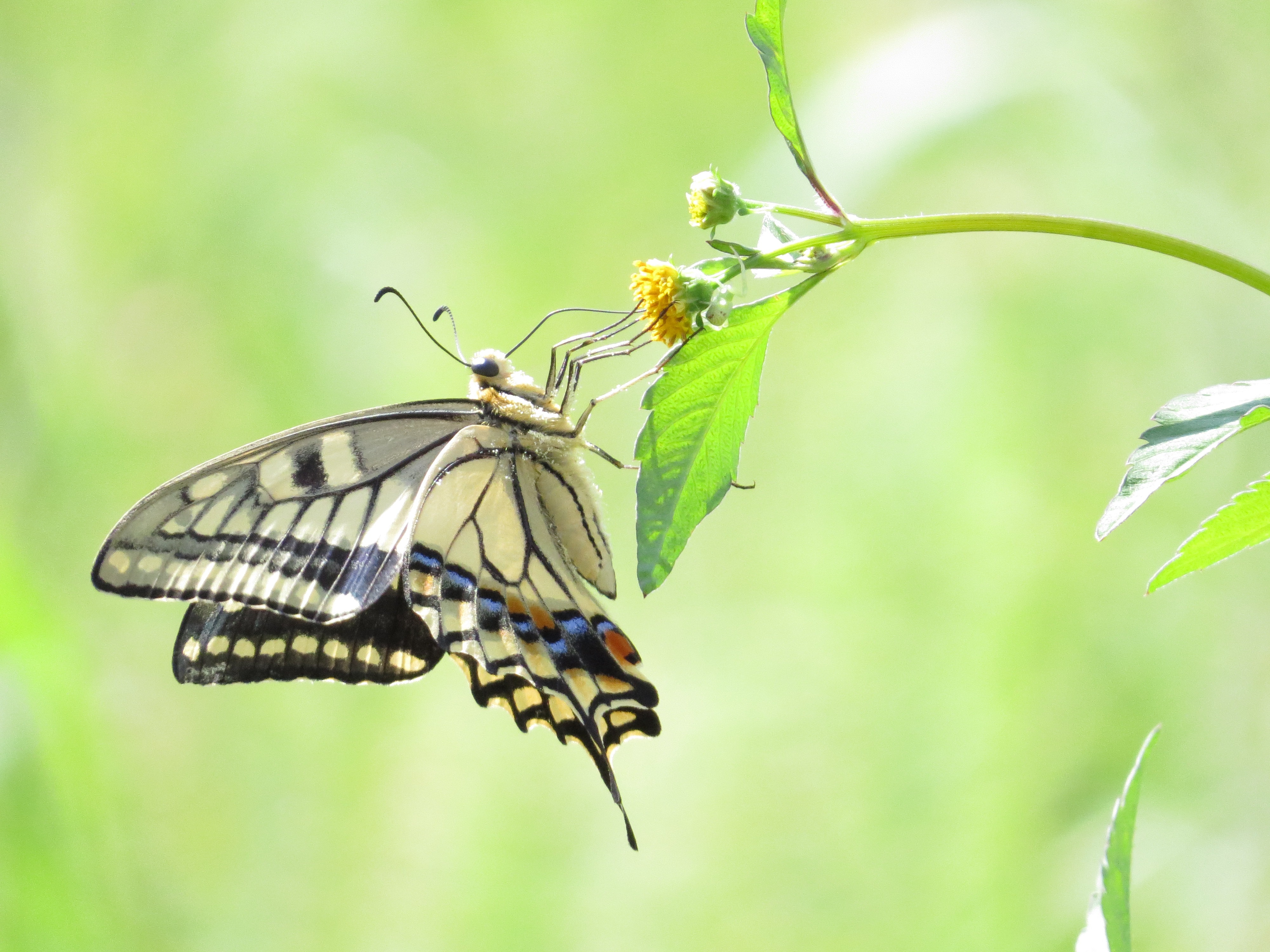 shallow focus photo of butterfly on flower buds