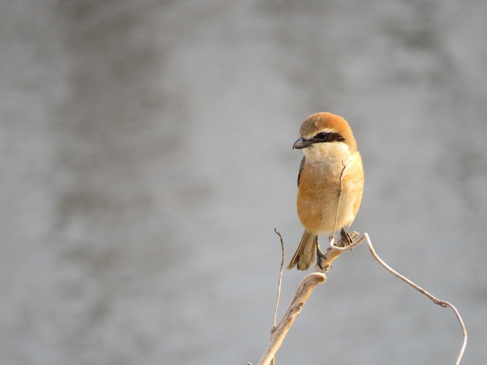 macro shot of yellow bird