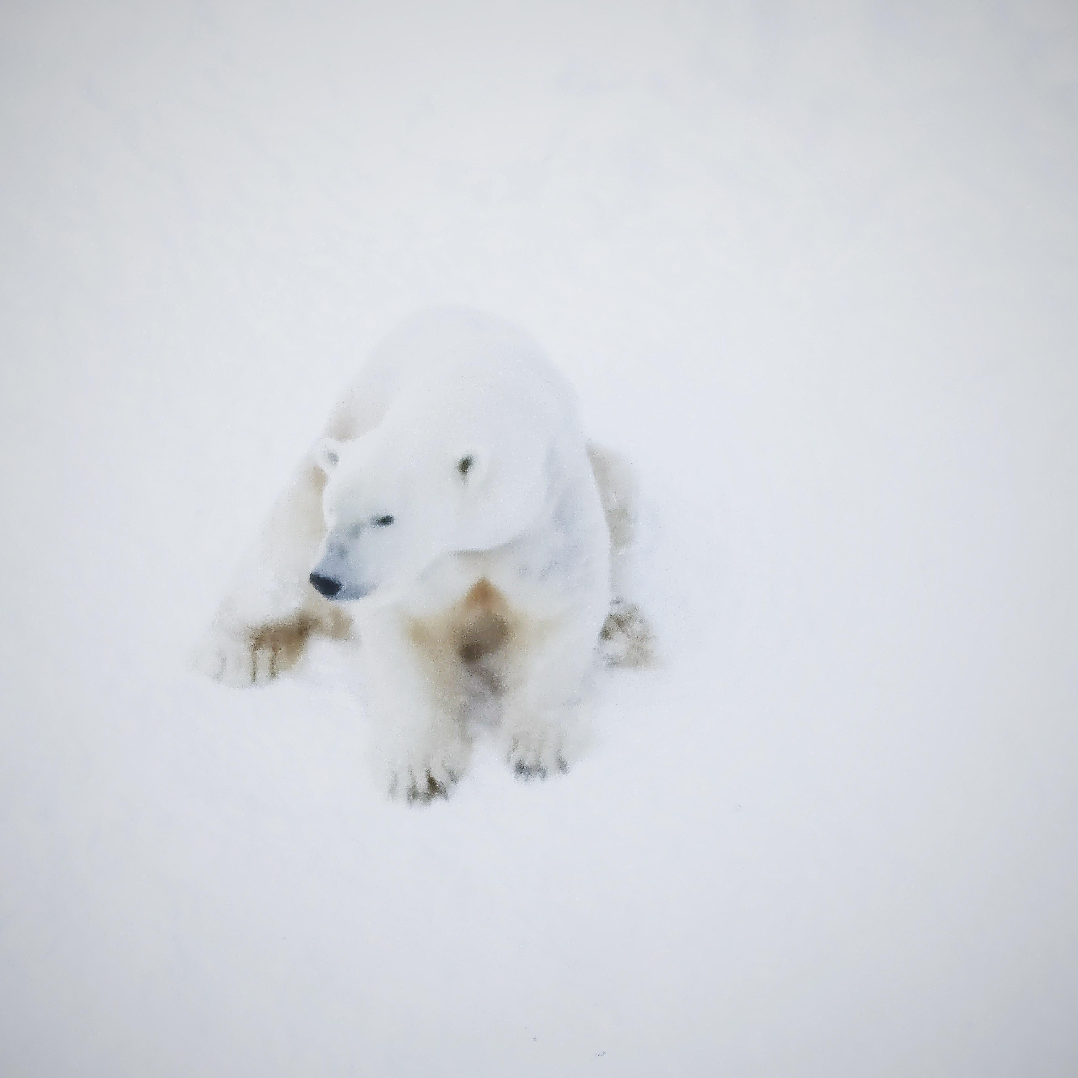 polar bear on snow covered ground