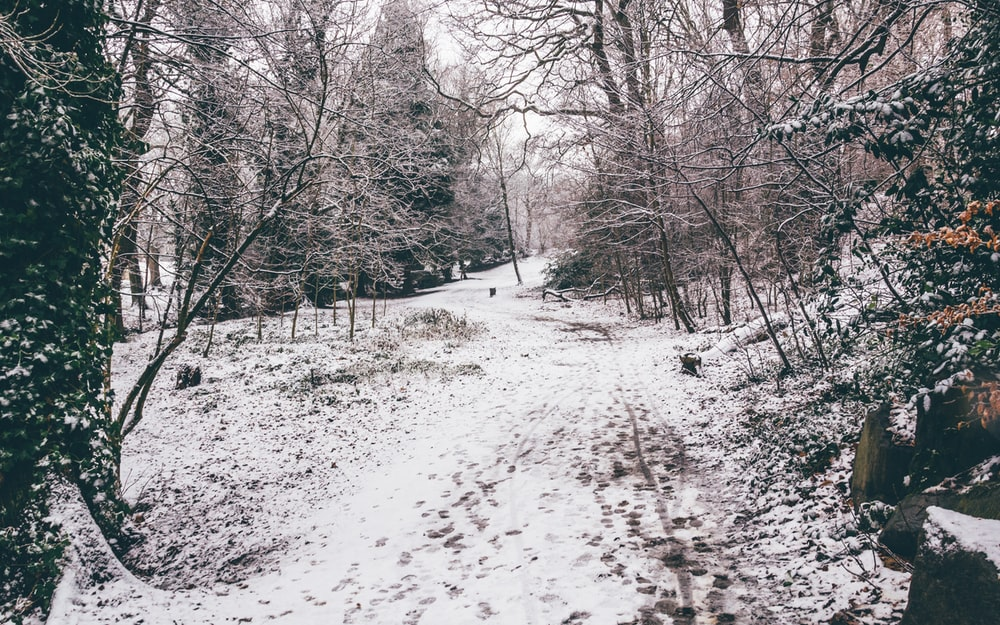 snow covered pathway between trees