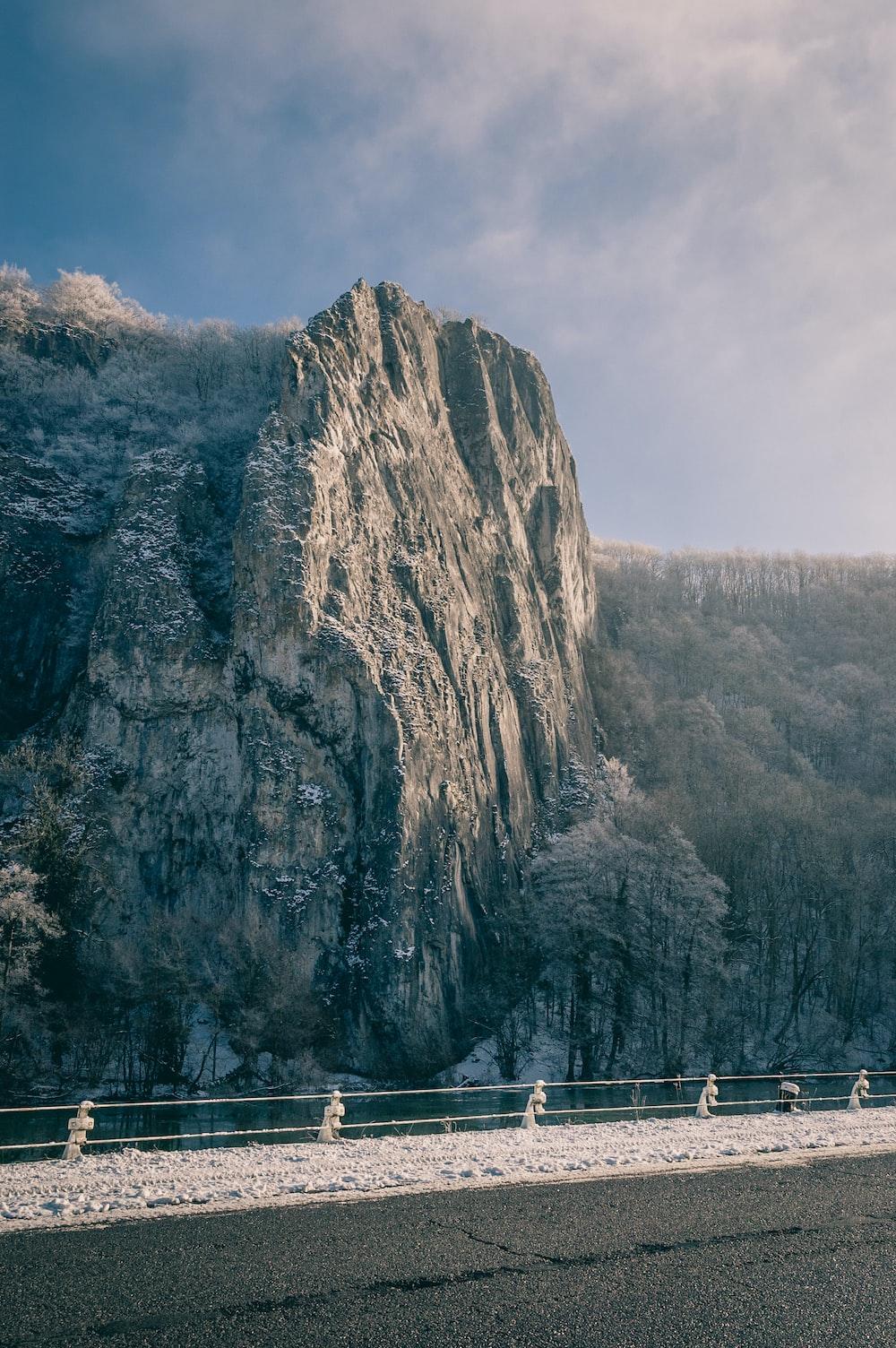 landscape shot of trees