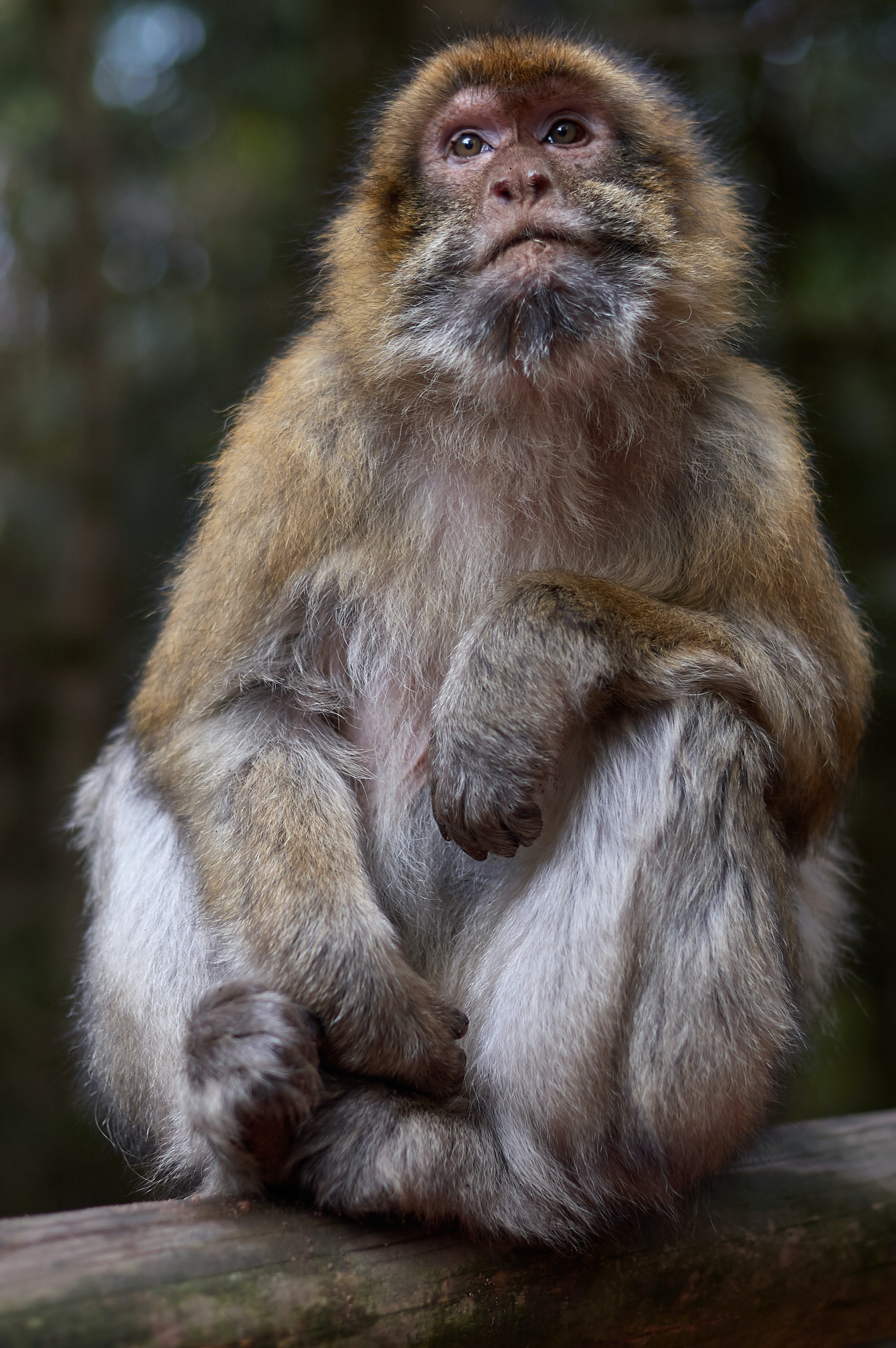closeup photo of primate