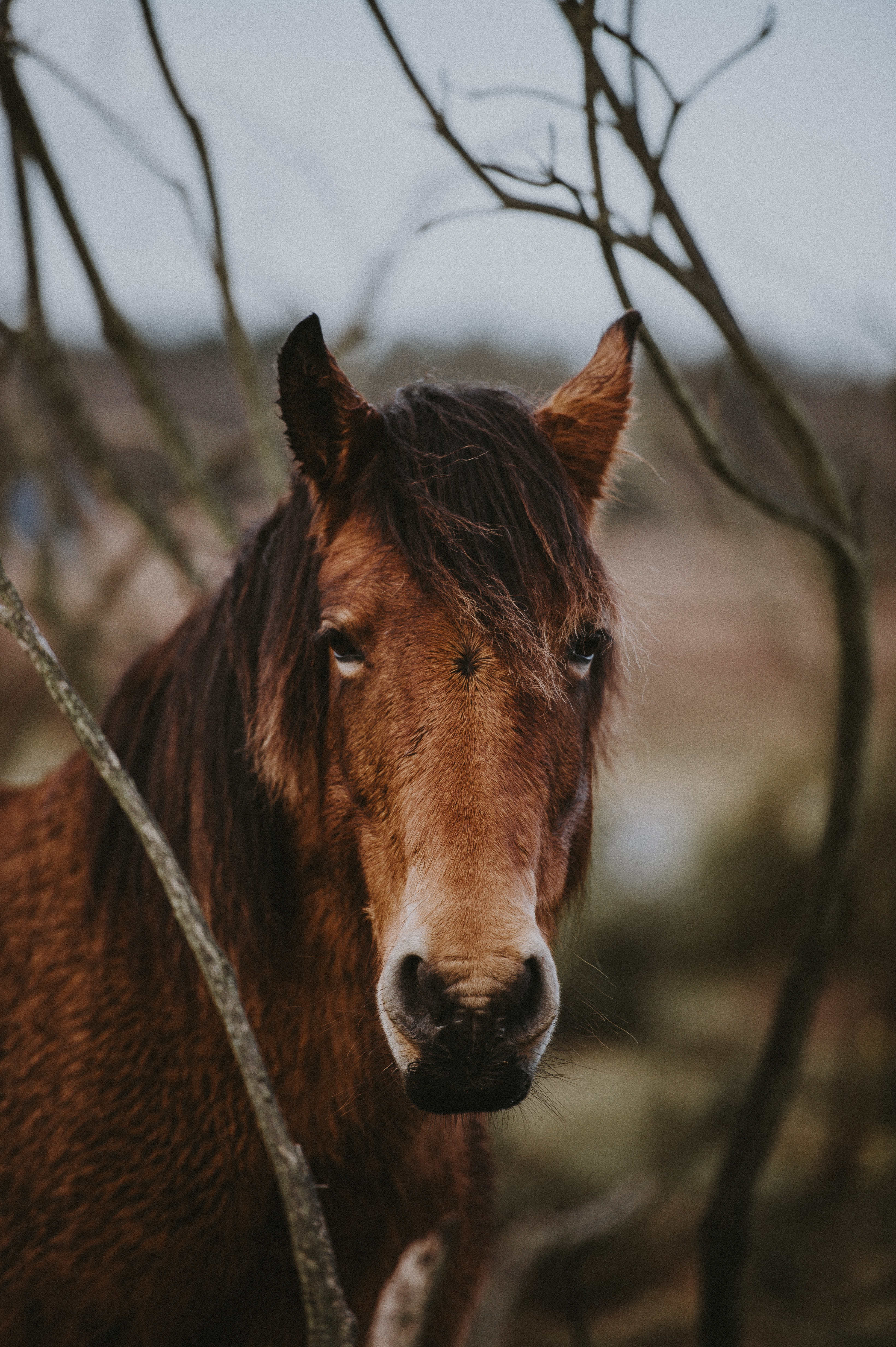closeup photo of brown horse near bare tree