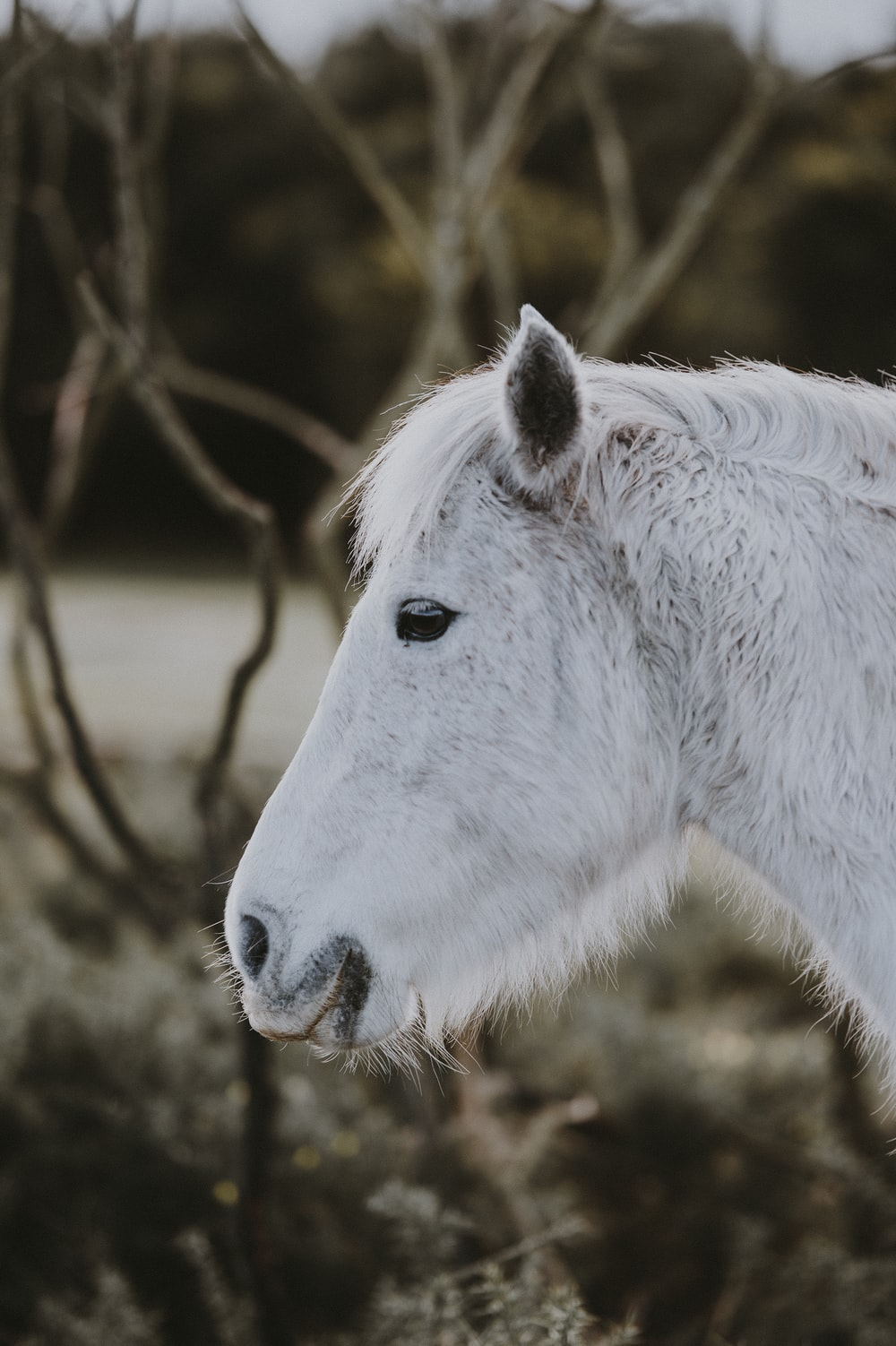 closeup photo of white horse head