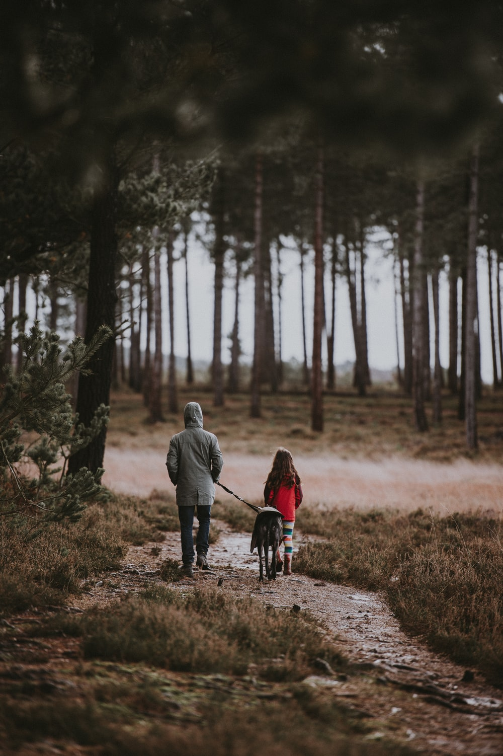two person near trees