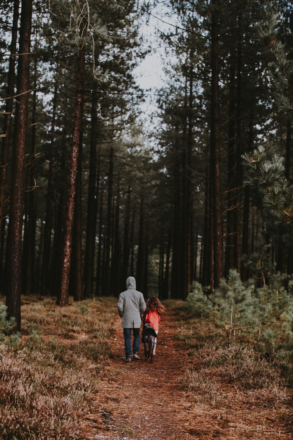 two person walking on pathway between trees