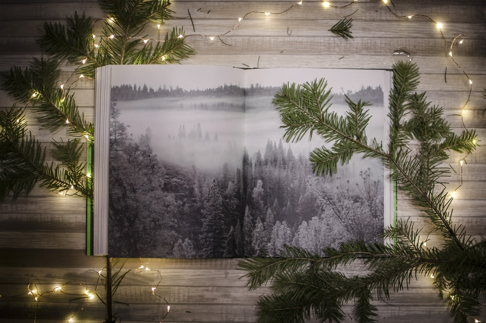 tall trees near lake poster beside string lights