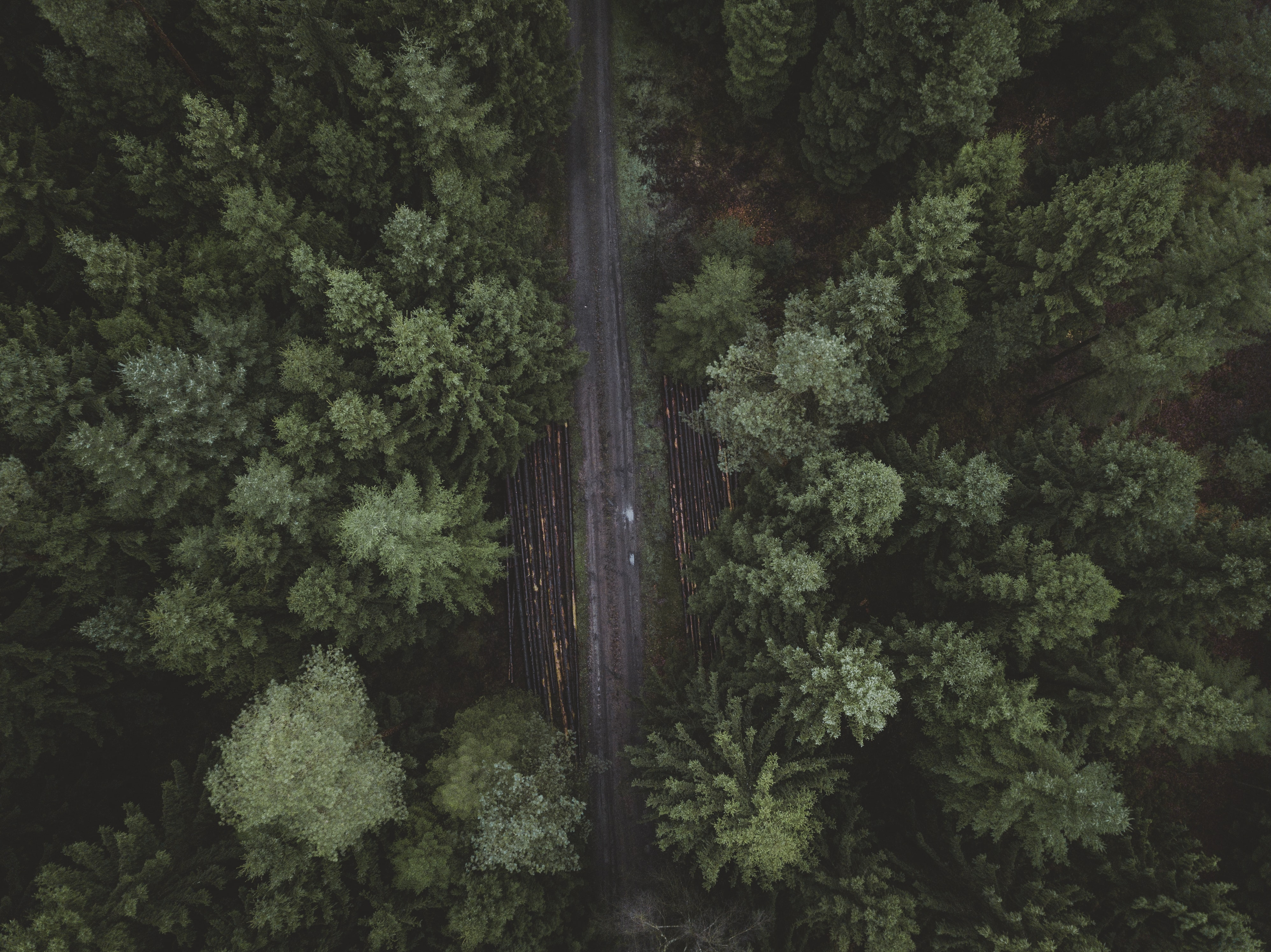 bird's-eye view photography of road surrounded with pine trees