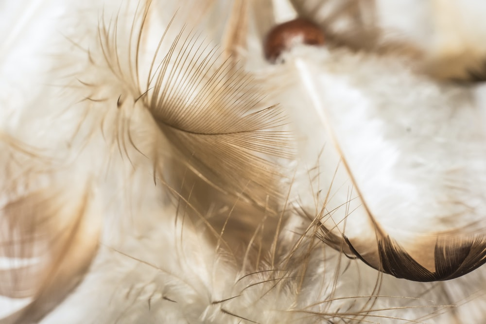 selective focus photograph of feathers on white surface