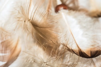 selective focus photograph of feathers on white surface angel teams background