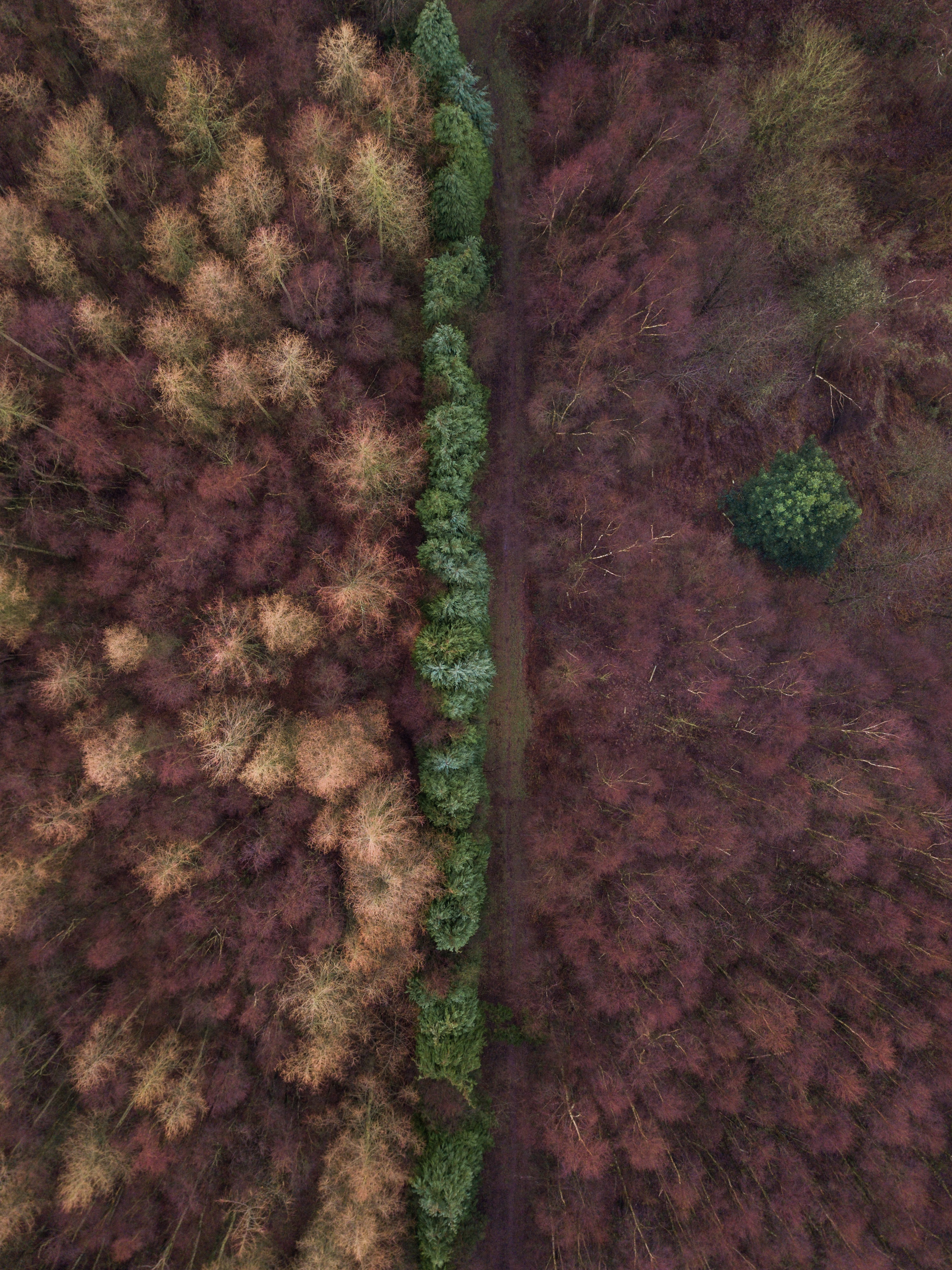 aerial photography of tree lined dirt road at daytime
