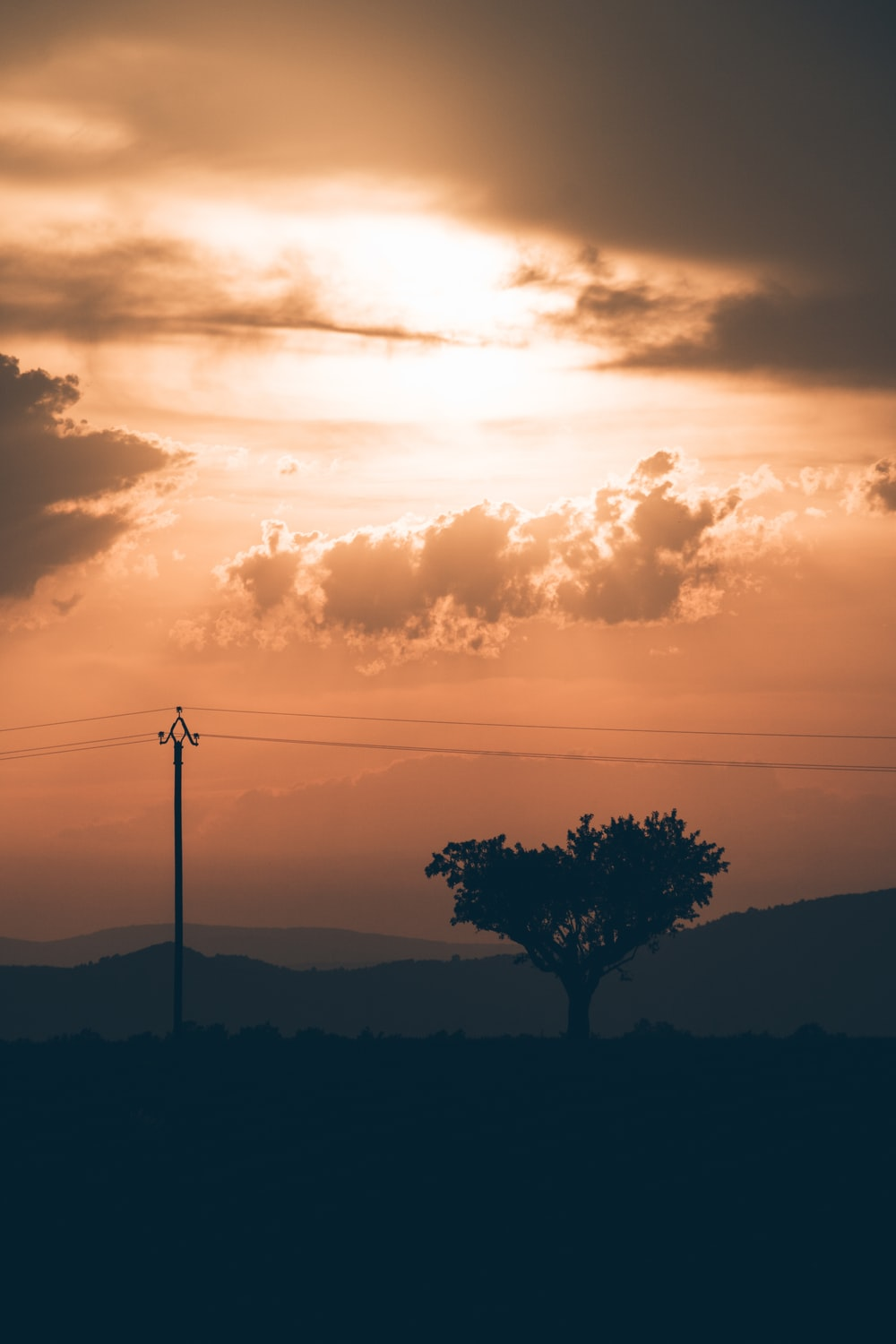 silhouette of tree beside electric post at golden hour