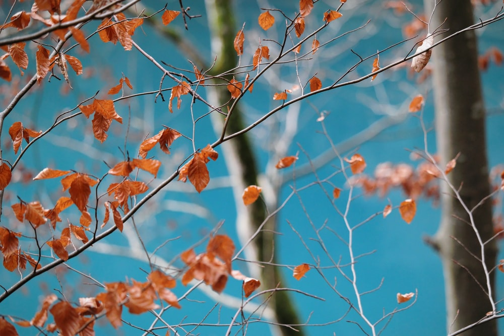 selective focus of tree leaves
