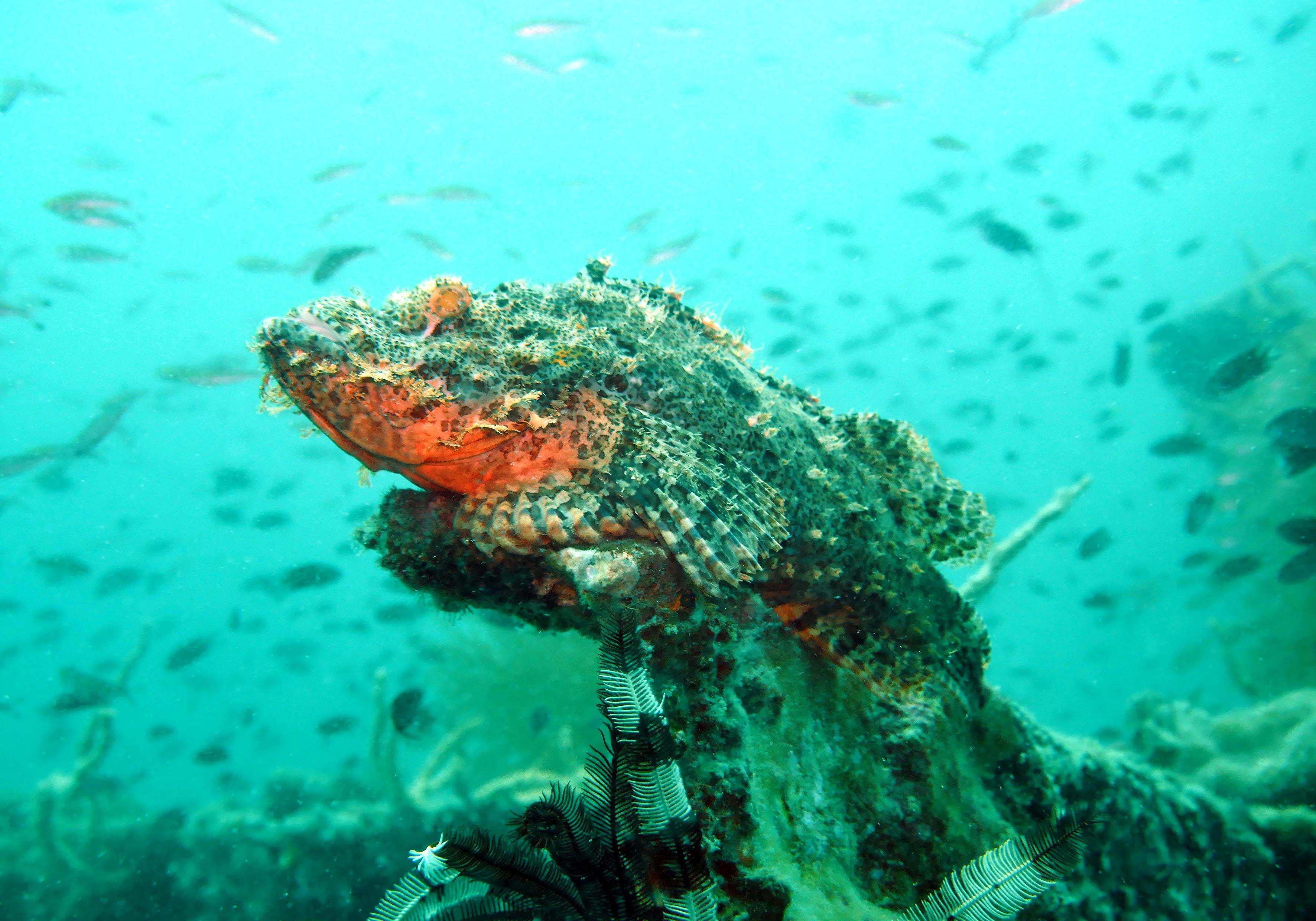 underwater photography of gray and orange fish