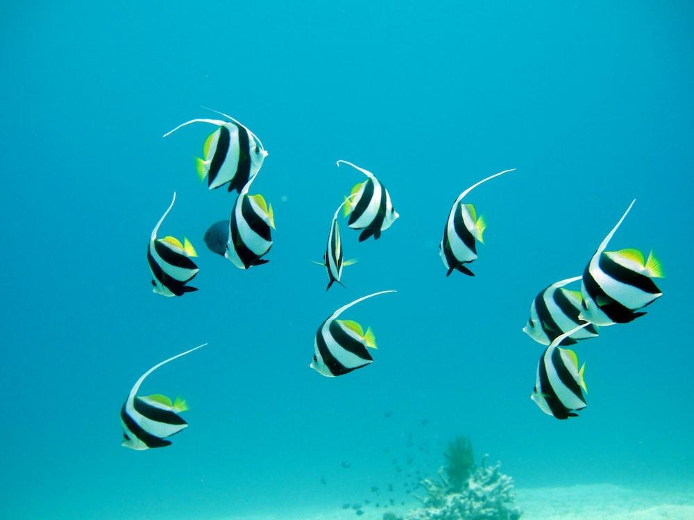 closeup photo of ten pet fish