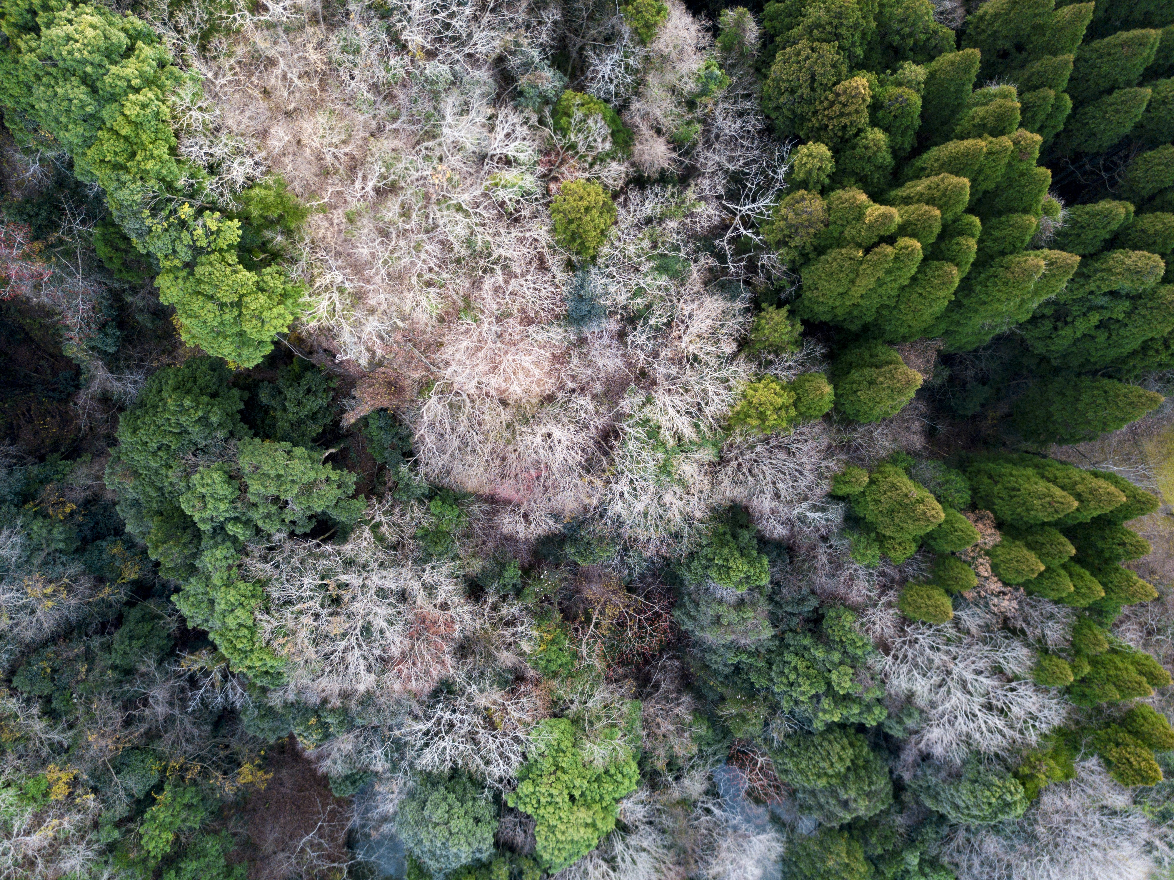 aerial photo of forest